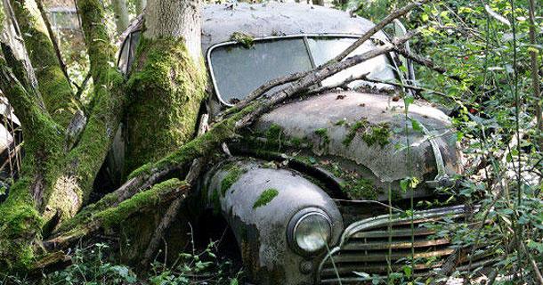Автомобильное кладбище в лесах Швецарии (34 фото) - юмор, анекдоты...