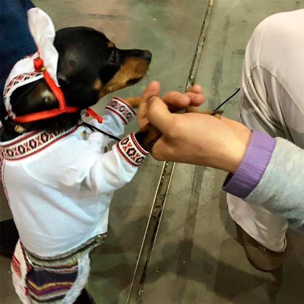 Собак в киеве одели в вышиванки и