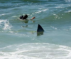 Стали известны детали атаки акулы на россиян.
