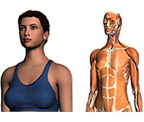 Как сделать внутренние органы человека