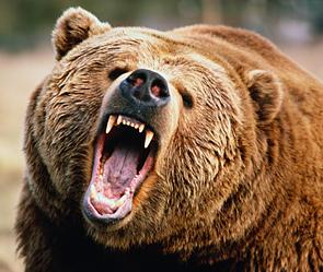 Россия это медведи балалайки и водка WhatQ.Ru.