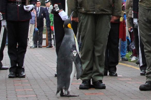 Пингвин вШотландии был удостоен звания бригадного генерала