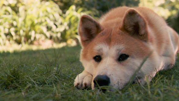 Кинорежиссер «Хатико» снял новый фильм оверной собаке