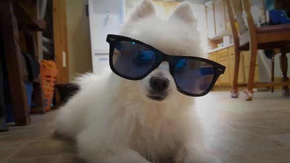 Вweb-сети интернет простились составшим мемом псом-певцом