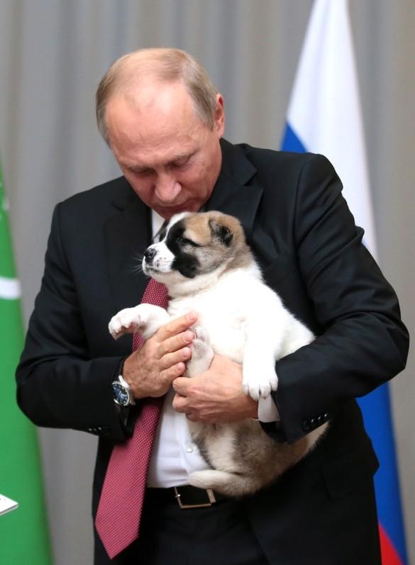 """Владимир Путин со щенком """"Верный"""". Фото: kremlin.ru"""