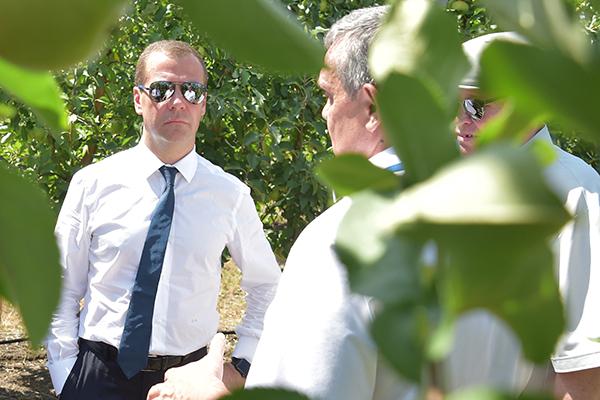 Медведев попробовал на вкус краснодарские яблоки