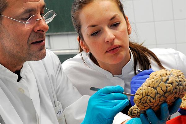 Ученые вырастили копию мозга человека