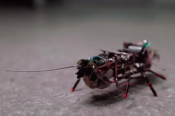 Российские ученые создали таракана-шпиона