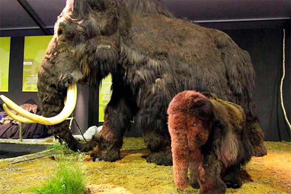 В России нашли мамонта для клонирования