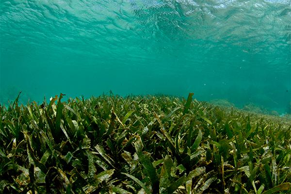 Таинственная форма жизни заселяет океаны