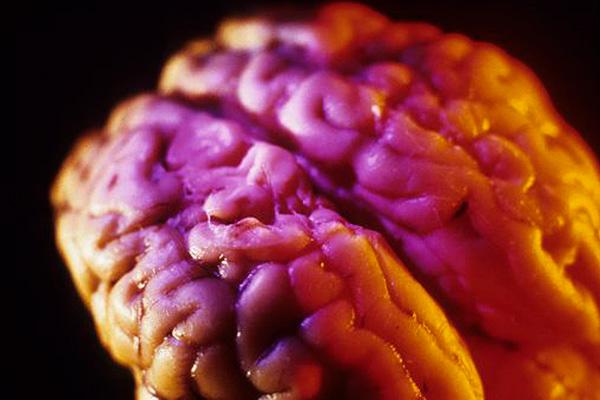 Ученые заморозили живой мозг