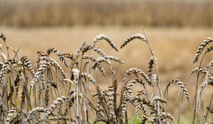 Россия побьет советский рекорд урожая