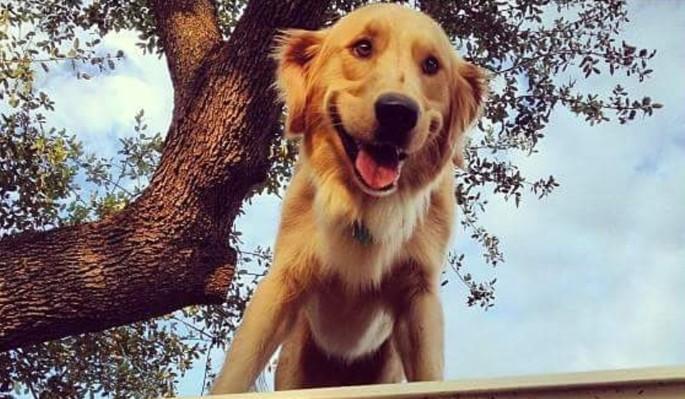 Сидящий на крыше пес стал звездой Сети
