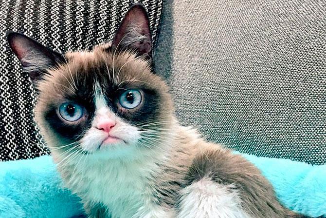 Самая популярные кошки