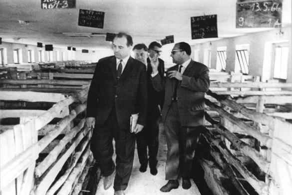 Горбачев посещает свиноводческое хозяйство в ГДР, 1966 год. Фото: wikipedia.org