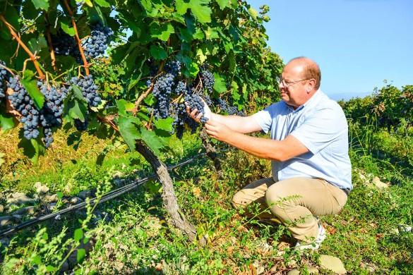 французский винодел-технолог Филипп Леспи