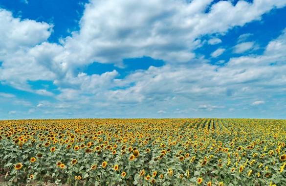Зеленский разбазаривает украинские черноземы. Фото: www.globallookpress.com