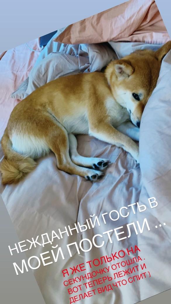 Фото: instagram.com/annasedokova