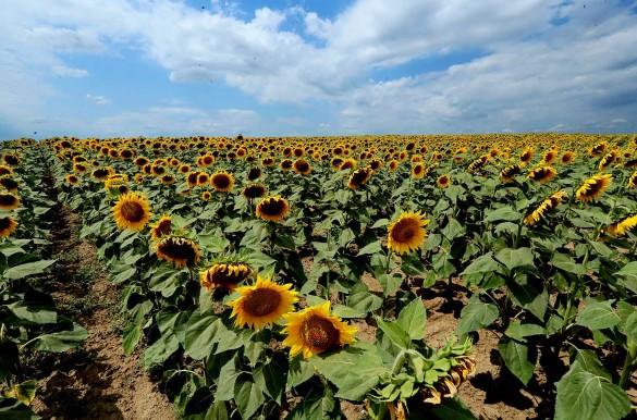 Зеленский продает землю, Украина 2019. Фото: www.globallookpress.com