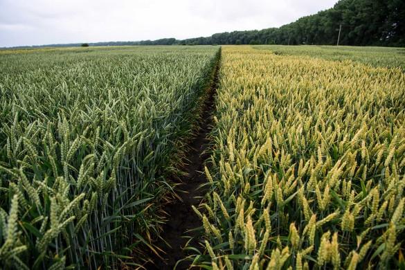 Зеленский продает землю, Украина; 2019. Фото: www.globallookpress.com
