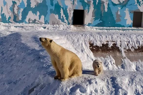 Колымана и малыш. Фото предоставлено зоопарком Орто Дойду