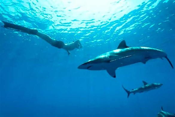 Фото: Reefhunter