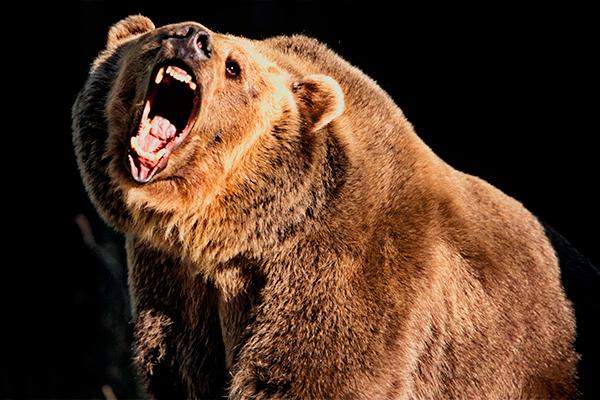 Медведь-людоед съел грибника