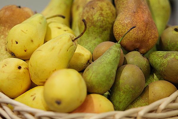 Бельгия уничтожает урожай груш
