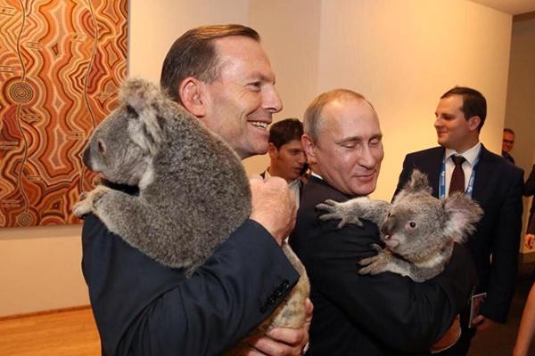 Фото Путина с коалой растрогало интернет