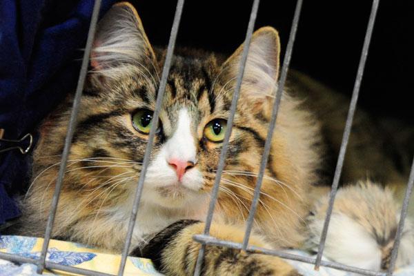 Приставы арестовали кота за долги