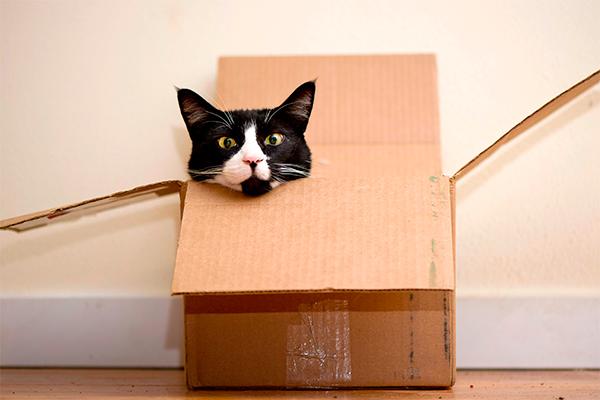 Разгадана тайна кота Шредингера