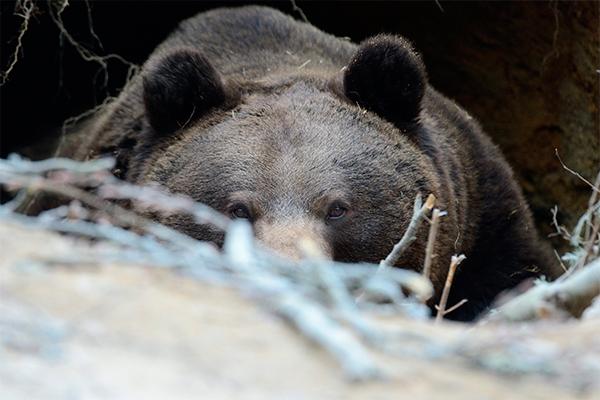 Медведя убили возле магазина