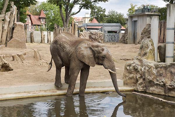 Взбесившийся слон затоптал людей