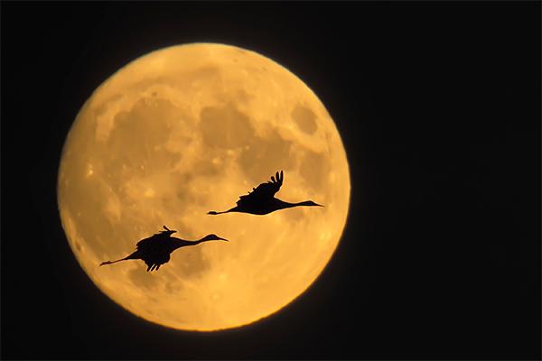 Роскосмос отложил полет на Луну