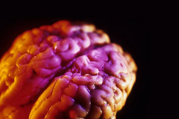 Чем кормить свой мозг