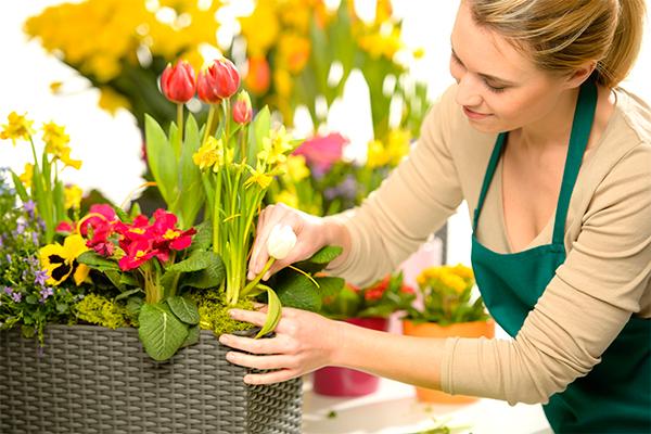 7 лучших комнатных растений для сп
