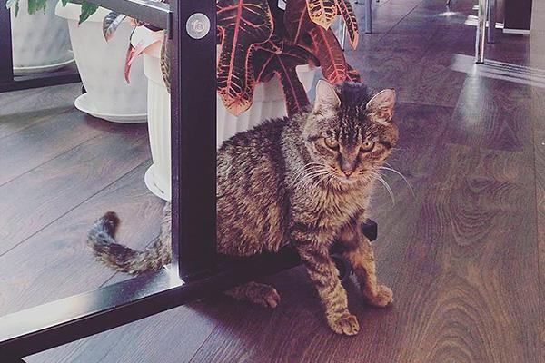 Ограбившая аэропорт кошка Матроска похитила рыбу