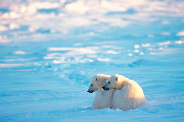 Зачем иностранцы едут в Арктику