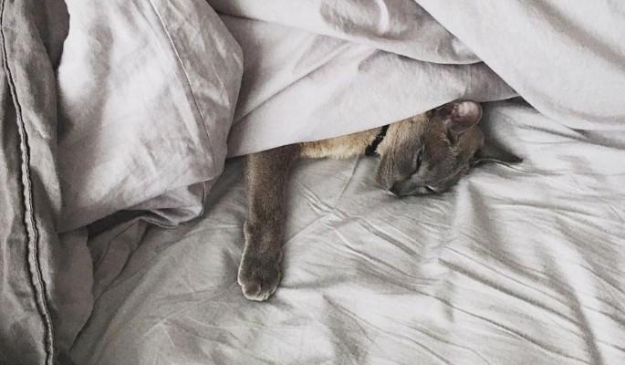 Спящие под одеялом коты покорили Сеть