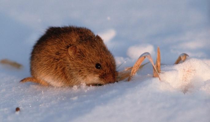 Оператор оставил беспомощную мышку в ледяном плену