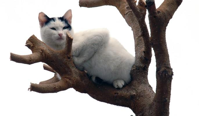 В Москве спасли застрявшую на дереве кошку