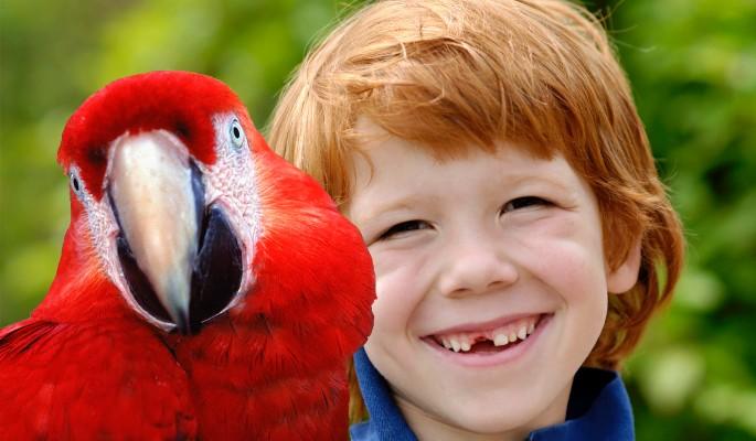 Отец вырвал мальчику зуб при помощи попугая