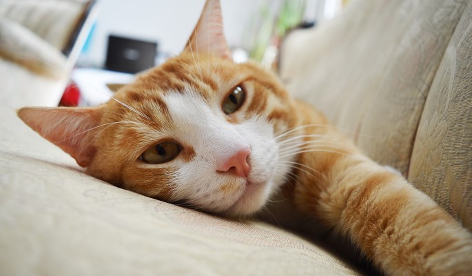В Сети появился бесконечный источник кошачьего урчания