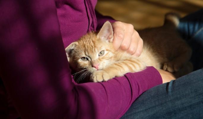 Законопроект об обращении с животными Госдума рассмотрит осенью