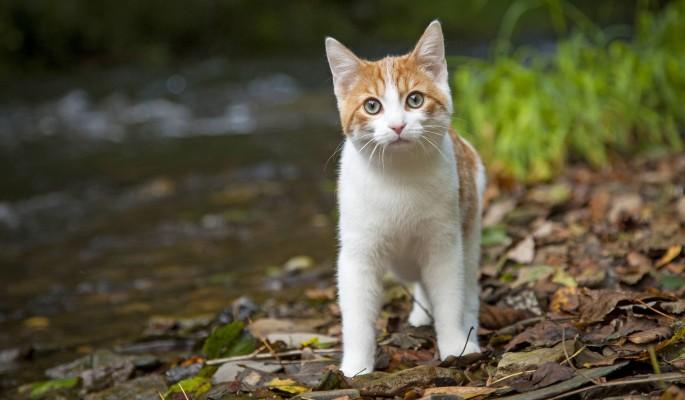 Ученые признали кошек жидкими