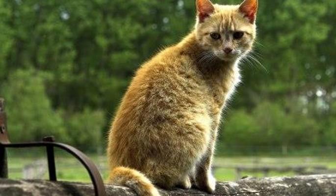 Обидчивый мужчина до смерти застирал кота подруги