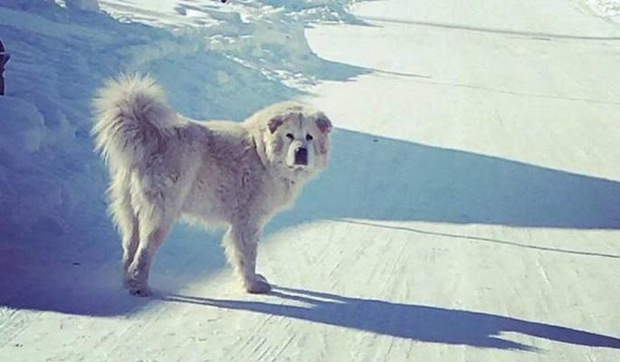 Безумные регионы: в Свияжске требуют расследовать убийство собаки-талисмана