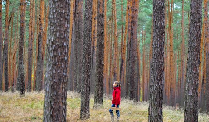 Россиян просят защитить Чудской лес