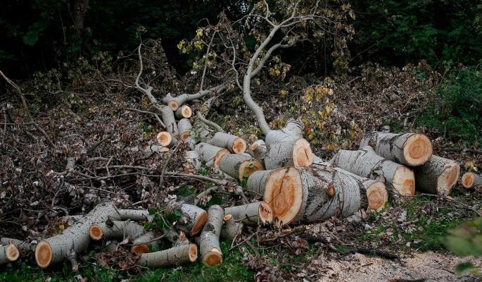 Вырубка лесов вызывает смертельные эпидемии