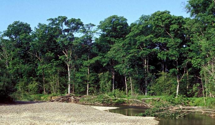 Володин предложил меры по предотвращению лесных пожаров